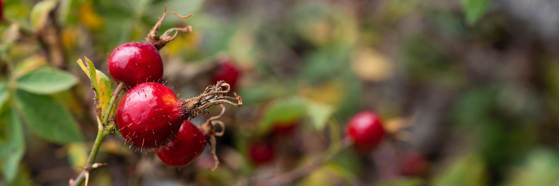 Чистое растительное сырье с Алтая